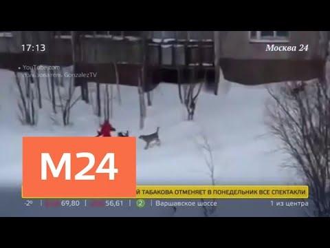 Как убитые горем люди мстят псам, напавшим на их близких - Москва 24