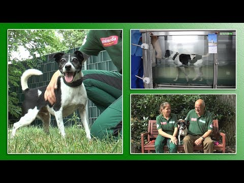 "Tier des Monats ""Leo"" | TierheimTV Hannover"