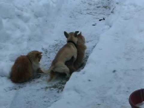 Small Dog Humps Big Dog Gif