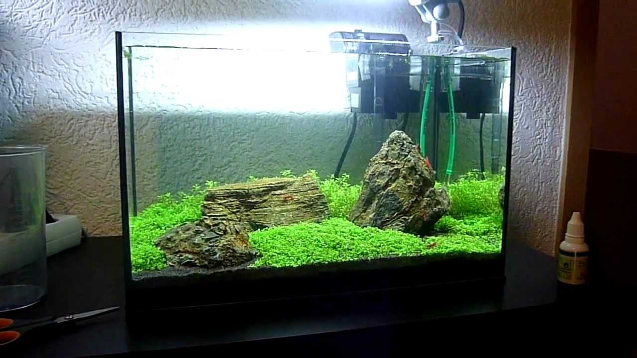 My 25L Iwagumi Aquascape - YouTube