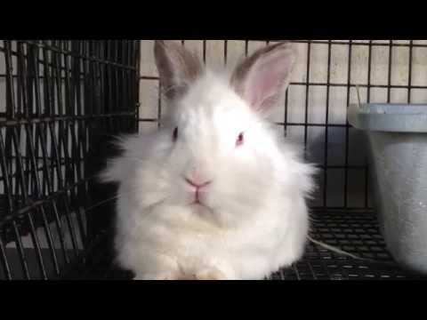 Parry Gripp - Boppity Bunny