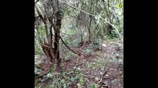 Caçada e correria kkkkk
