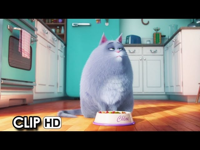 Meet Chloe from 'The Secret Life Of Pets' (2016) HD