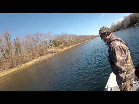 Fishing for Brown Trout on Arkansas's White River