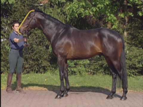 Die Persönlichkeit Ihres Pferdes, Linda Tellington-Jones, pferdia