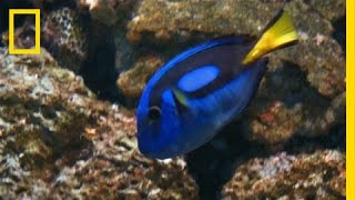 How Will 'Finding Dory' Affect Wildlife?