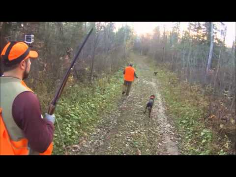 MN Grouse And Woodcock Hunting