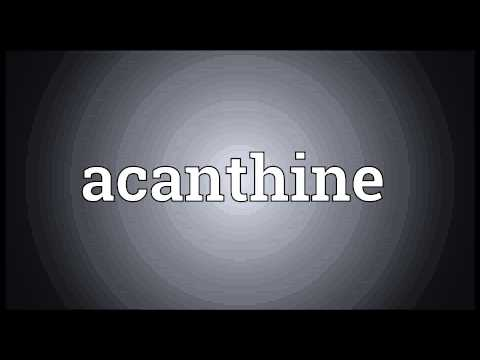 Header of acanthine