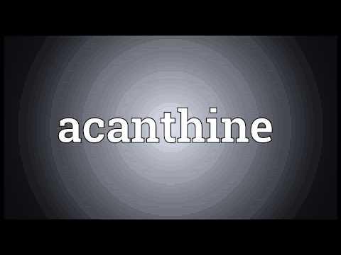 Header of acanthine