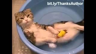 Gatos engraçados da internet