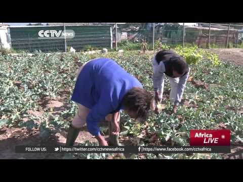 South African Community Garden Provides A Source Of Food And Income