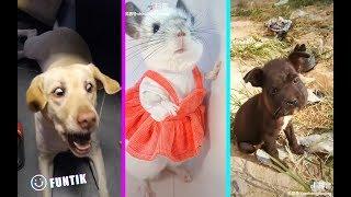 The Best Funny Pets TIK TOK Memes Compilation #2 🔥🔥🔥
