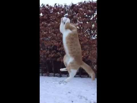 Cat catches snowball