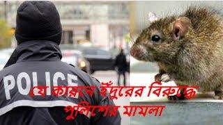 যে কারনে ইঁদুরের বিরুদ্ধে পুলিশের মামলা  Latest Hit  News