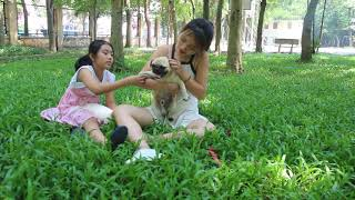 Lovely smart girl Playing Baby Cute Dogs On Rice Fields    How to play with dog & Feed baby dogs