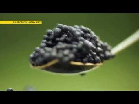 Как сделать черную икру дома | Ранок з Україною