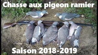 Chasse aux pigeon ramier dans le nord(59)saison 2018-2019