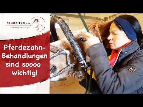 pferd stoffwechsel