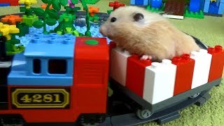 Tiny Hamster Playing on the Lego Playground
