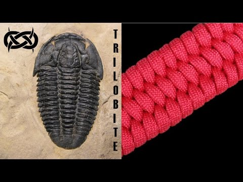Beginner Paracord: How to Make a Trilobite Paracord Bracelet