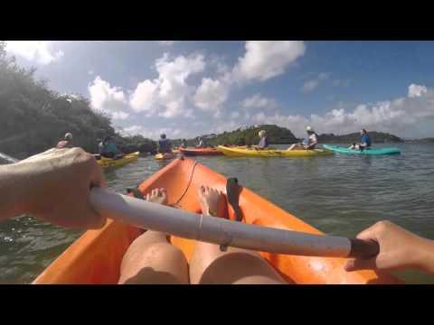 Caribbean Fun