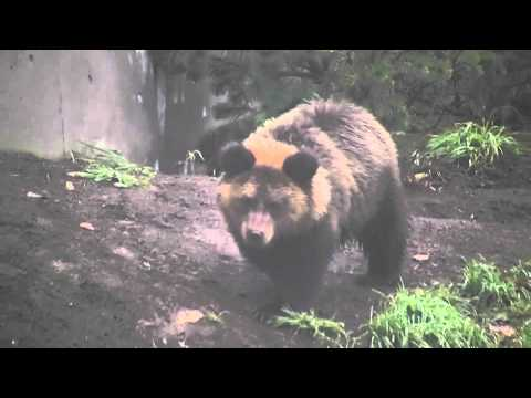 エゾヒグマのカステラ(円山動物園)