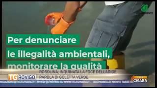 GOLLETTA VERDE SENTENZIA : FOCE ADIGE A ROSOLINA  INQUINATA