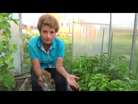 Чем обработать от белокрылки Ваши растения?
