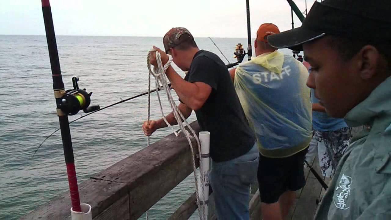 Hatteras chopper blue fish off seaview fishing pier 5 22 for Seaview pier fishing report