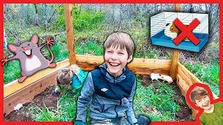 BUiLDING A GiANT FORT with PET RATS and GUINEAS for KIDS!
