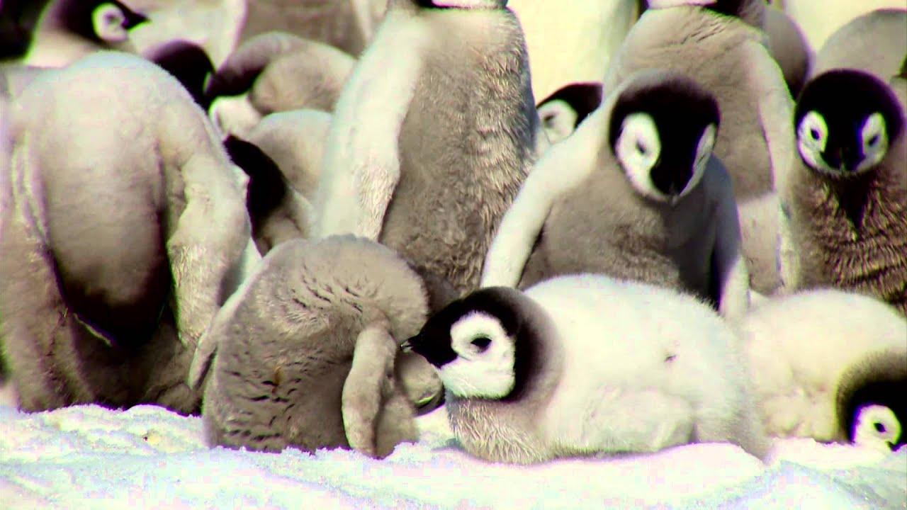 Pinguin eis wedding