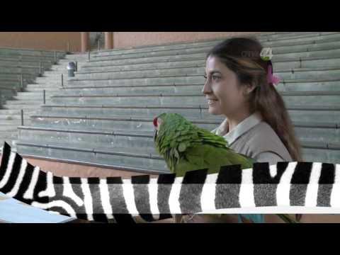 Desde el Zoológico: Estrellas del espectáculo del Zoo Guadalajara