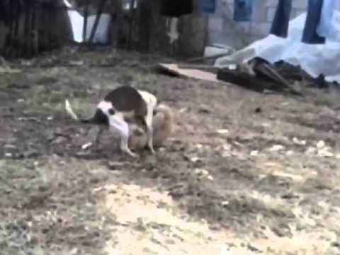 El video porno de mi perra