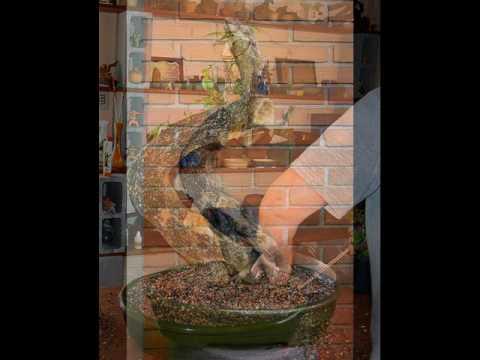 Jardinagem e paisagismo bonsai portal paisagismo for Paisagismo e jardinagem