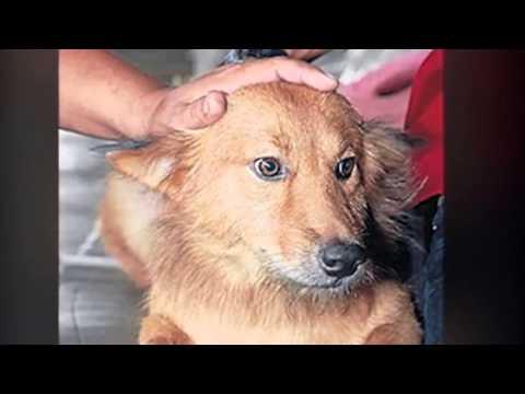 Un perro heroico salva la vida de una bebé abandonada