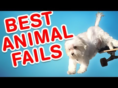 TRY NOT to LAUGH Animals FUNNY PET FAILS Compilation  2018   Epic Pet Videos & Moments