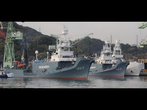 Japanese Whaling Fleet Heads for Antarctica...Whale Wars?