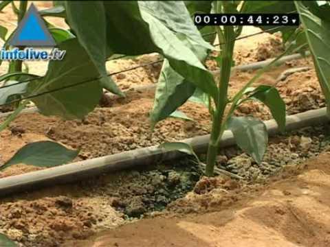 Agricultura en el desierto