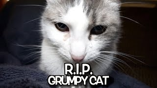 R. I. P.  Grumpy Cat - We'll never forget you.