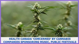 News TV | Health Canada 'concerned' by cannabis companies sponsoring music, public festivals