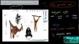 C.4.5. Vision in mammals. insects and worms (HSC biology)
