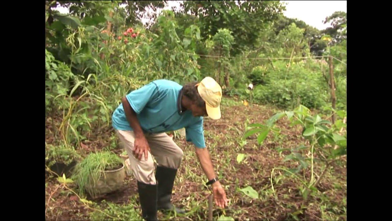 Proyecto agroecologico 1 productos amazonia el jardin de for Bazzel el jardin de los secretos