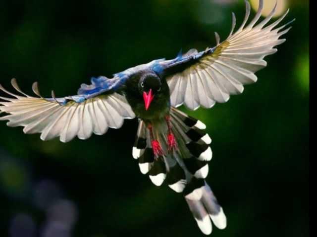 LAS AVES MÀS HERMOSAS DEL MUNDO, CANTO DE AVES.THE WORLD'S MOST BEAUTIFUL BIRDS, BIRD SONG.