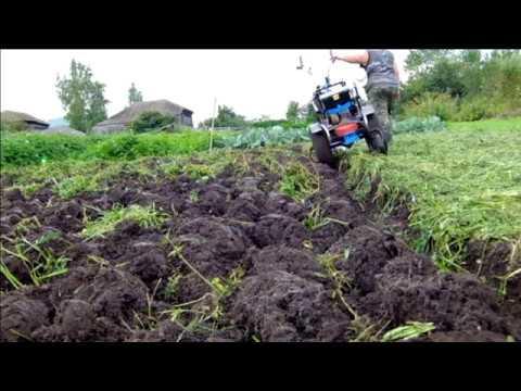 Вико-овсяная смесь как сидерат – посев, выращивание и мои отзывы