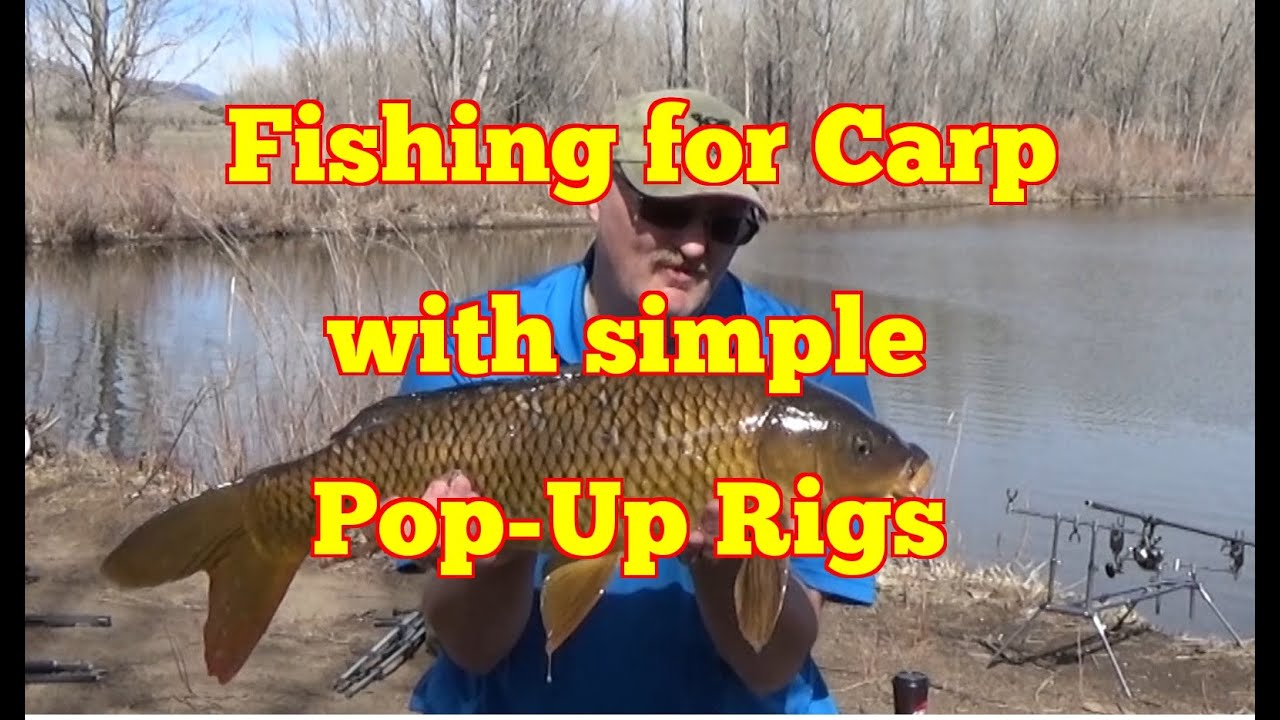 Pop Up Fishing : Carpquest s e carp fishing with simple pop up rigs
