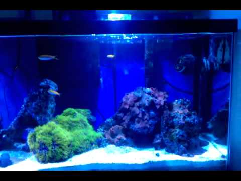 55 gal saltwater aquarium (private residence)
