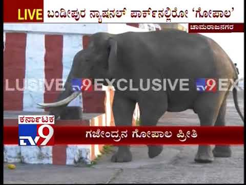 Elephant not only Takes Round of the Temple but also Takes Prasad from the Priest at Chamarajanagar