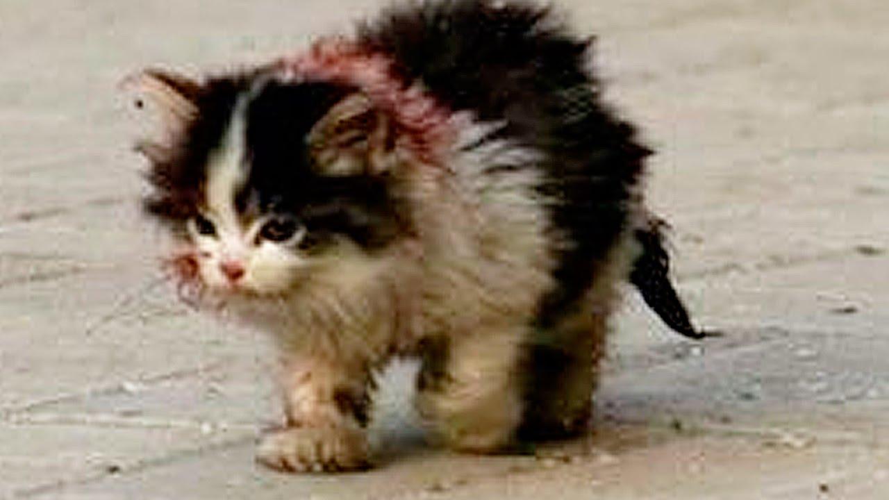 Котёнок стих текст