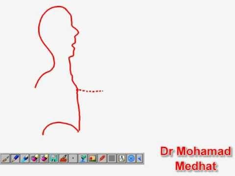 Neck Veins Examination Dr Mohamad Medhat