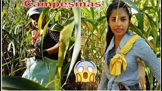4-Jóvenes Campesinas Ya En Acción En Medio De La Milpa🌽Todas Unass Guerreras-Tapiscada-P4